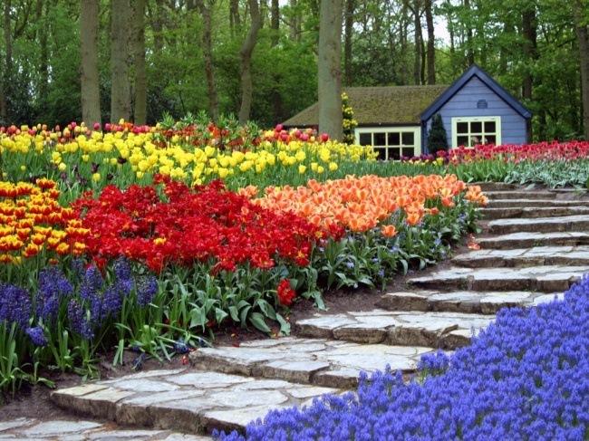 camp-cu-flori-de-primavara-in-fata-casei